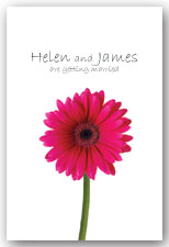 Hot Pink Cerise Gerbera Invitation