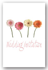 Mixed Colour Gerbera Invitation