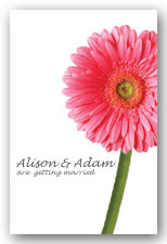 Pink Gerbera Invitation